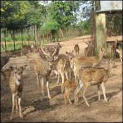Deer park at nabarangpur