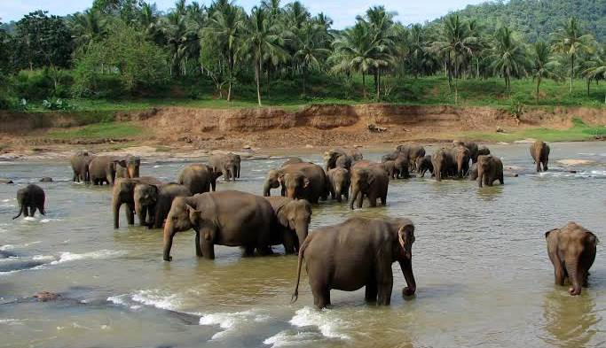 New Elephant Sanctuary To be Set Up In Odisha Soon